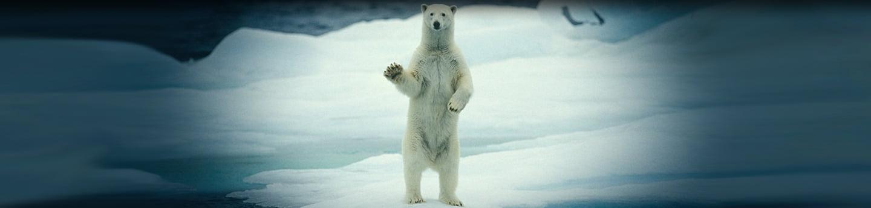 Chasseur D'Icebergs, Un Métier Qui Rapporte Mais…